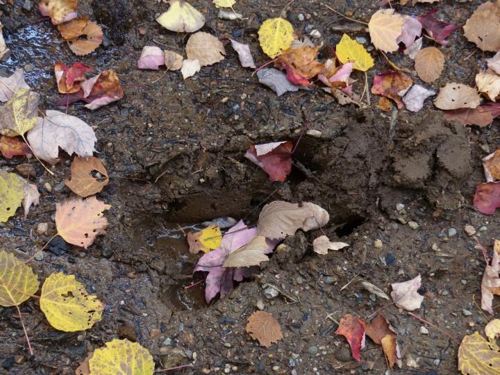 Moose footprint