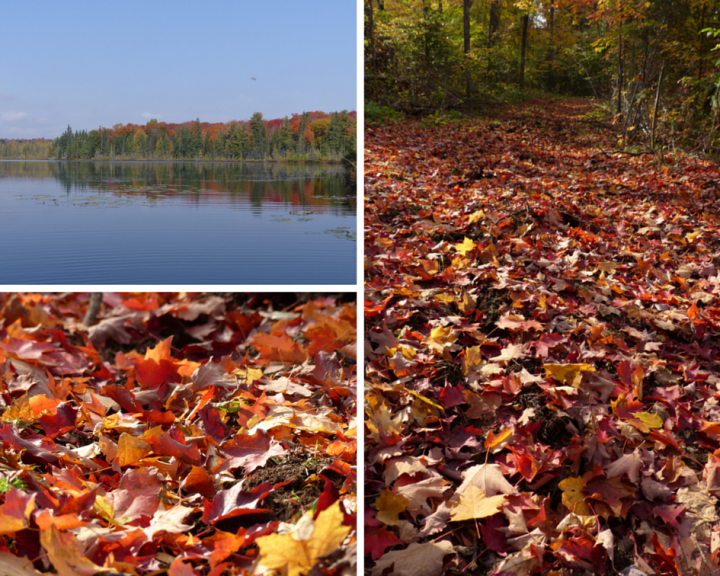 Autumn colours in Algonquin