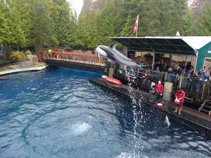 Dolphin at Vancouver Aquarium