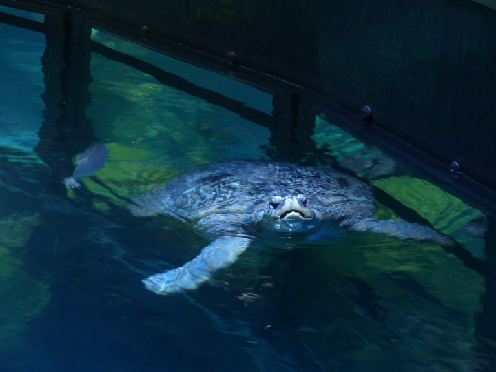 Turtle New England Aquarium