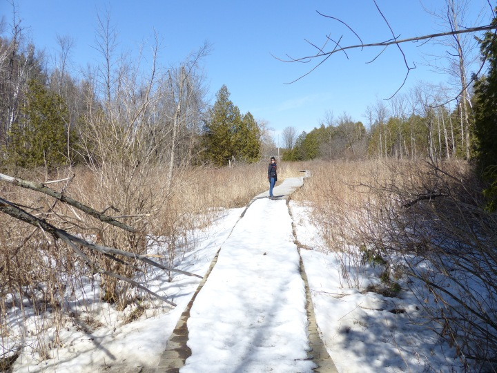 Bruce's Mill Conservation Area trail
