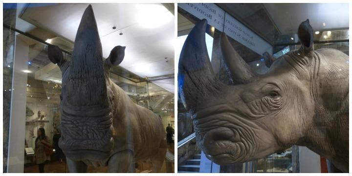 White rhino ROM