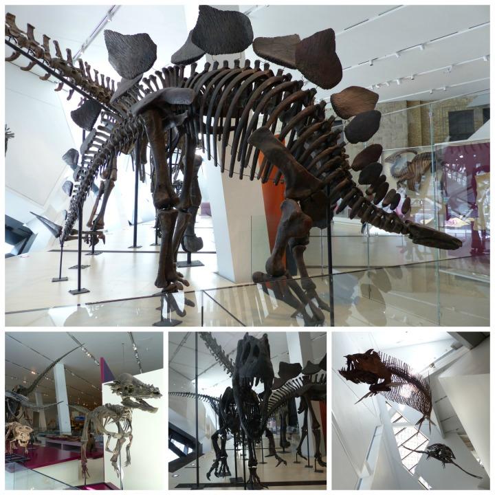 Stegosaurus ROM