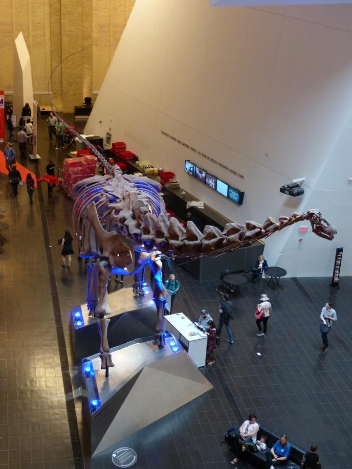 Futalognkosaurus ROM