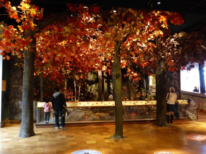 Autumnal scene ROM