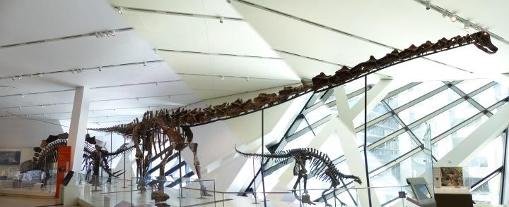 Barosaurus ROM
