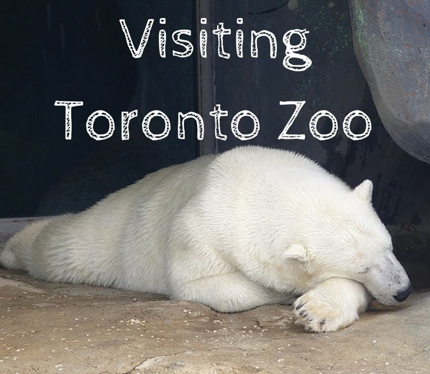 Toronto Zoo featured image