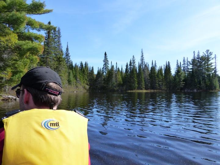 Algonquin moose search