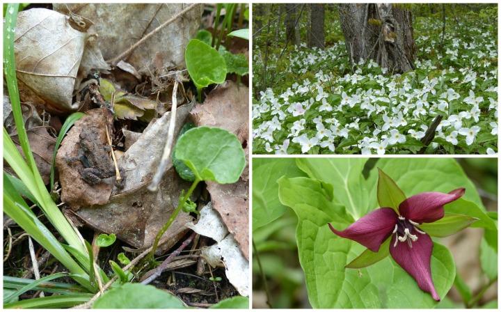 Arrowhead flora & fauna