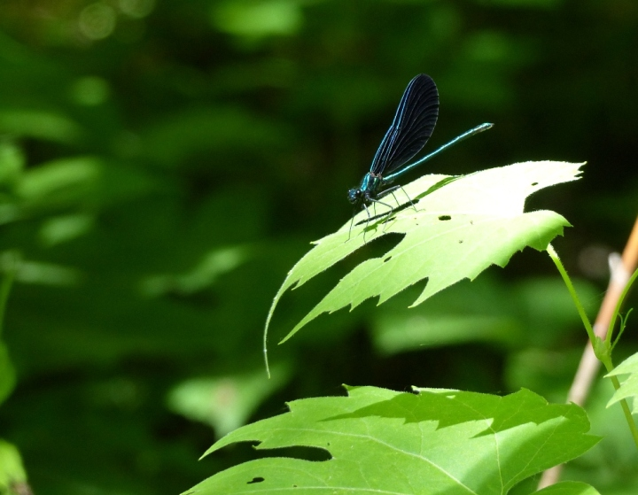 Webster's Falls insect
